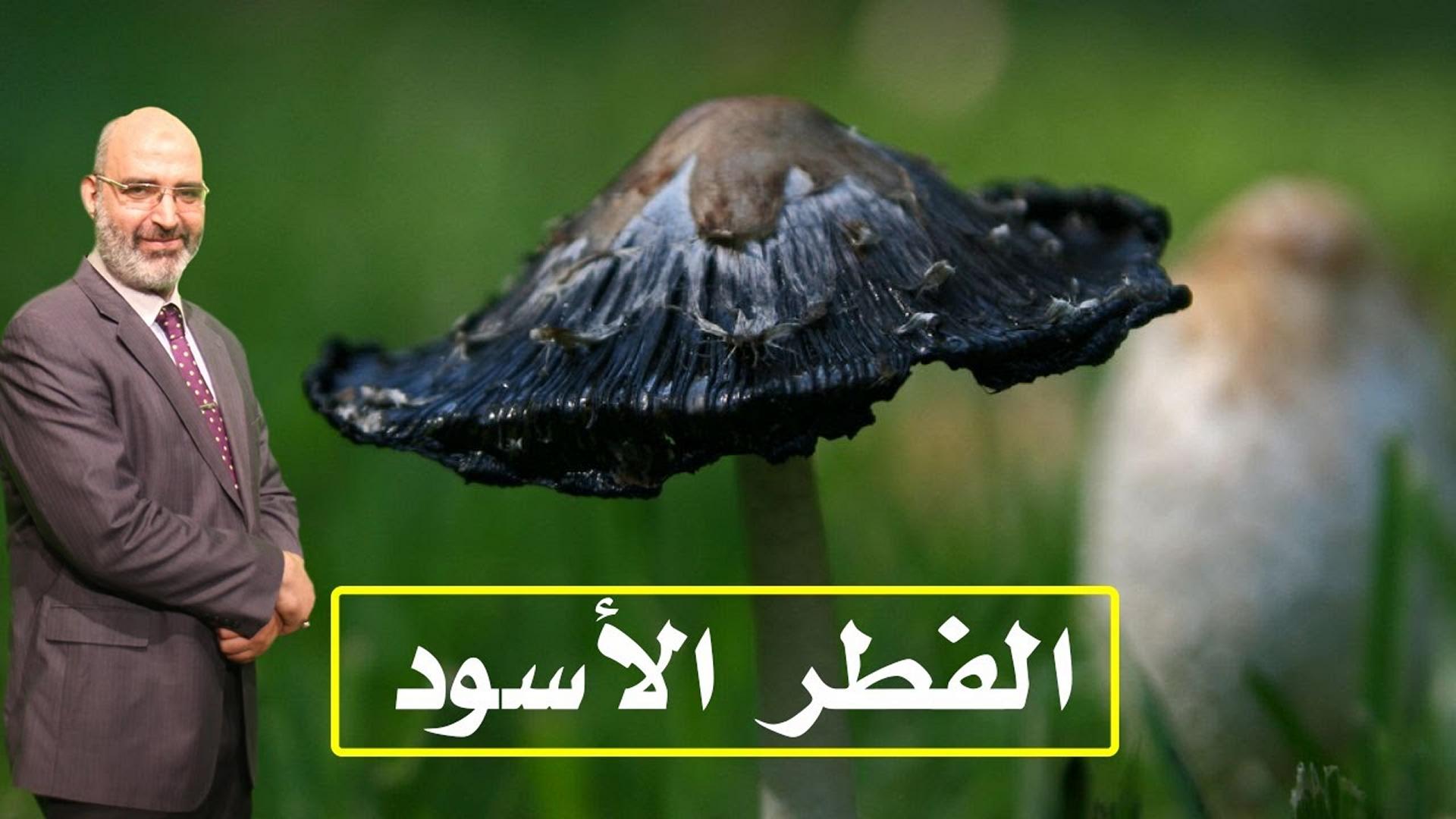 الفطر الأسود .. الدكتور أمير صالح